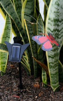 Solar Flickering Butterfly