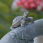 Country Gardens Two-Tier Solar Fountain - Turtle